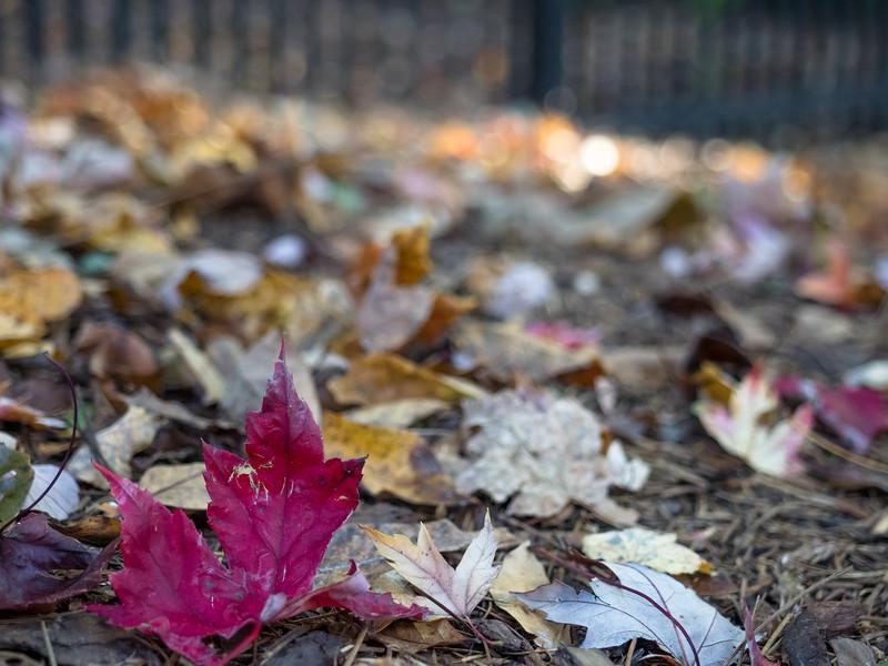 03 Nov 05 Leaf (1 of 1).jpg