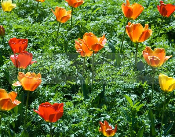 Gardens of Monticello 4-11-17