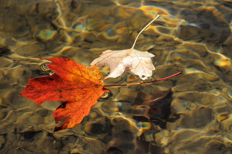 two-leaves-floating.jpg