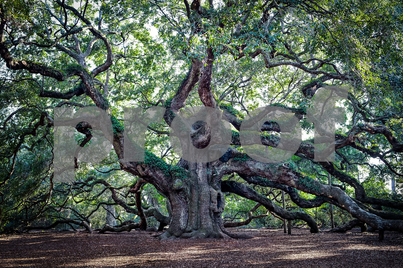 Angel OAK Downcreek (1 of 1).jpg