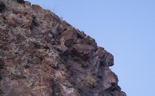 Lookout MNT Phoenix AZ 6-2020