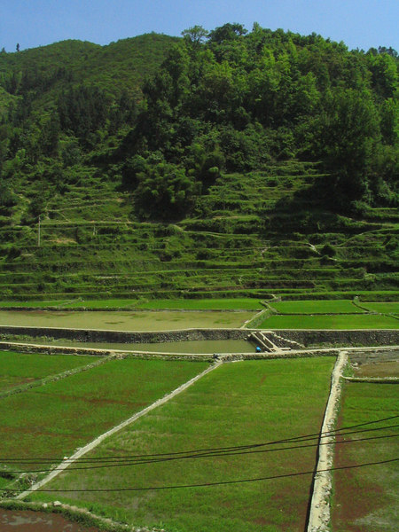 Sitting in a lush valley, Zhaoxing is small village surrounded by rice fields.