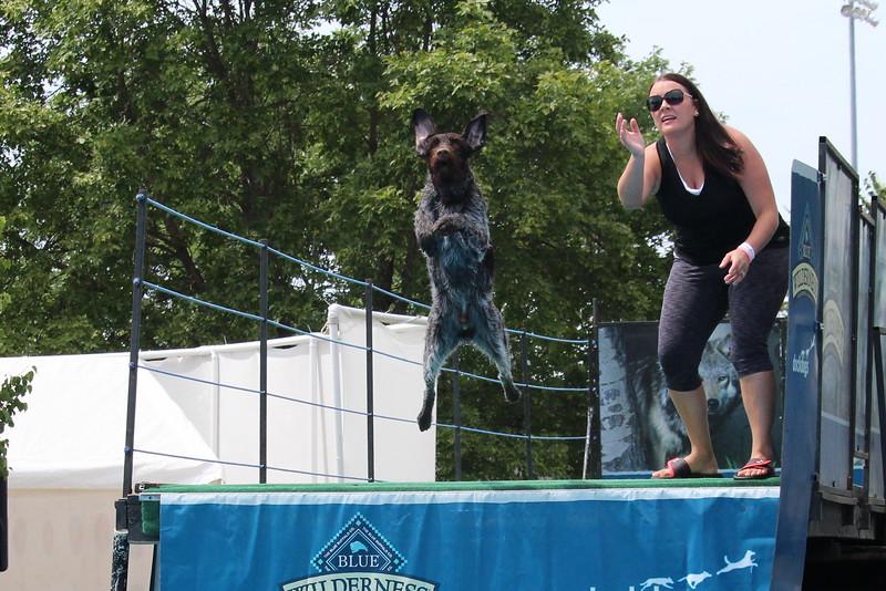 2015.8.6 Winnebago County Fair Dock Dogs (30).JPG