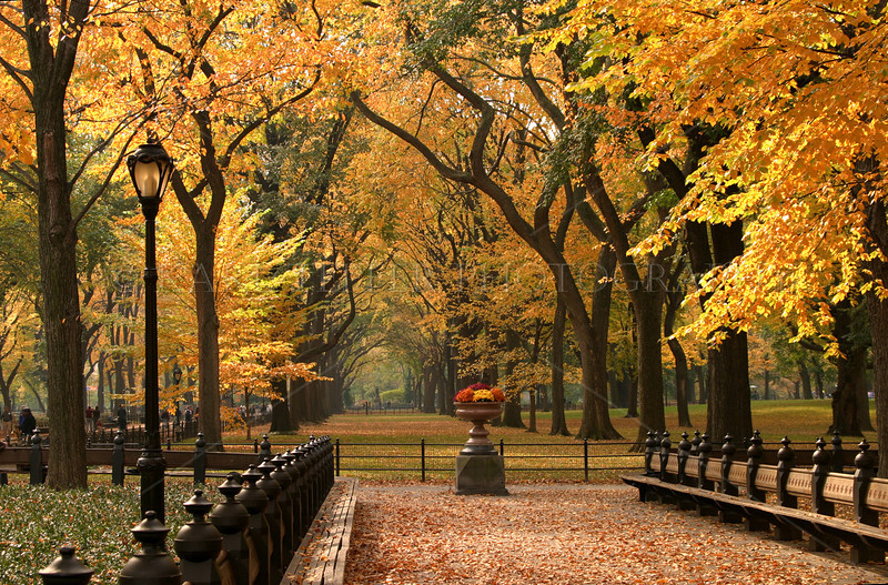 Fall Fire: Scenic images of Fall on Long Island