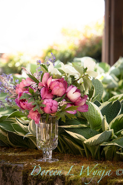 5259 Peaonia x 'Smith Opus 2' Takara - Cornus 'Venus' cut flowers_0944.jpg