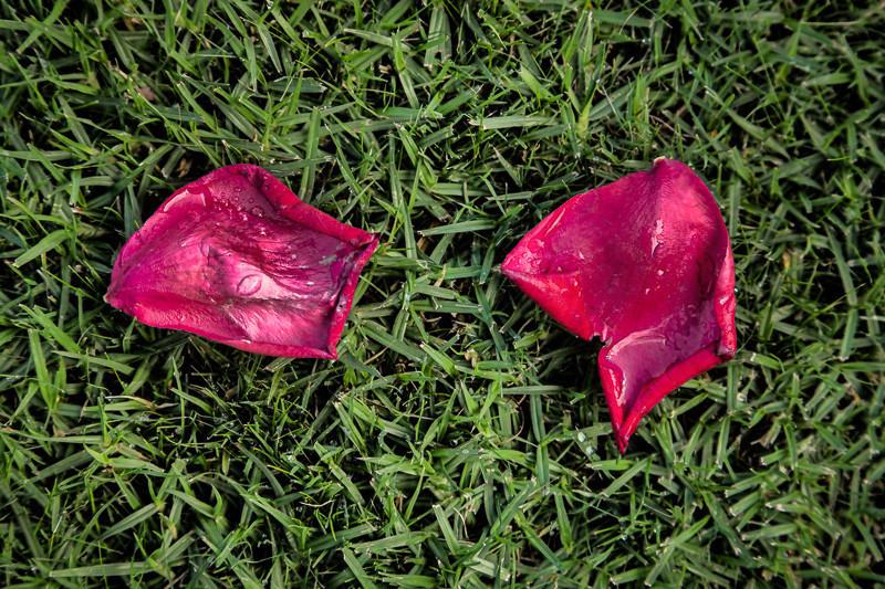 oct 4 - petals.jpg
