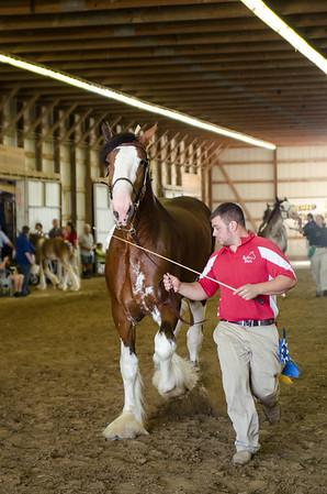 Jr Champ.Reserve Clyde Stallion