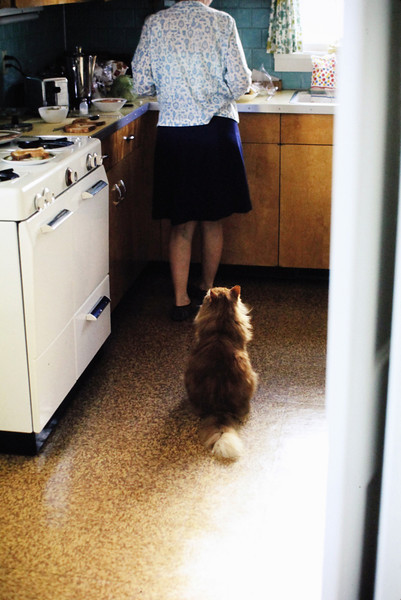 """""""How long must I sit here before she realizes that cats are entitled to supper, too?"""""""