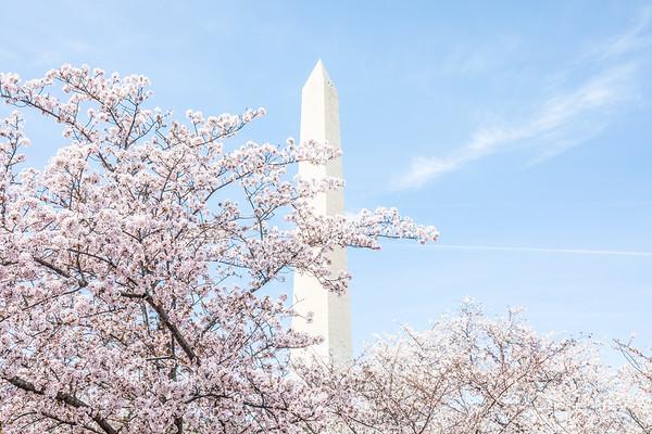DC Cherry Blossoms (2018-04)