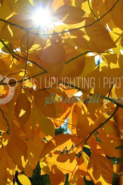 Orange Leaves-Flare_batch_batch.jpg