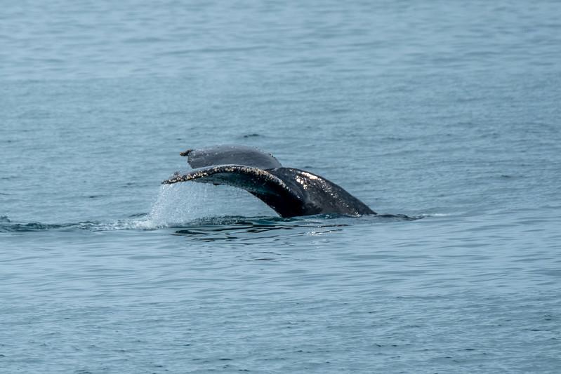 Whale Tail, Kenai Fjords National Park