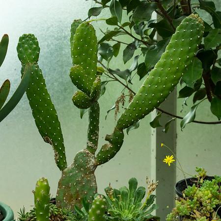Blog 14 Auckland Tour 2-Botanical AKL