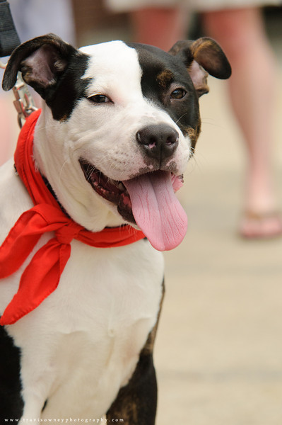 20110514 PetSmart Adoption Event-19.jpg