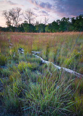 Theodore Stone Forest Preserve