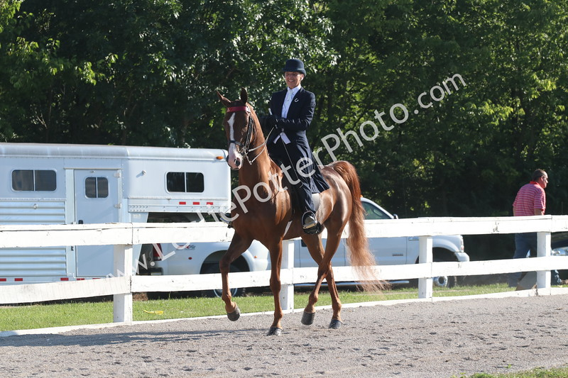 Class 4: Bluegrass Select Series American Saddlebred Country Pleasure