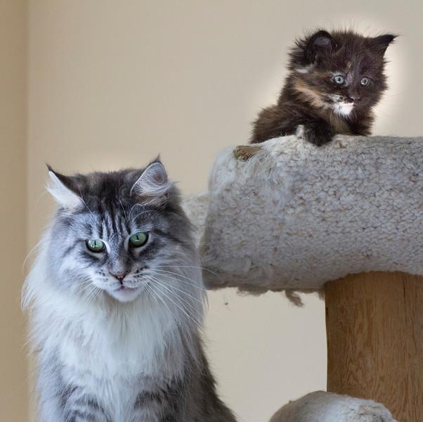 Kittens241.jpg