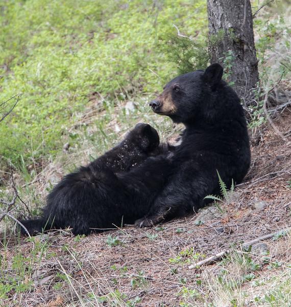 Bear Black Nursing 6258.jpg