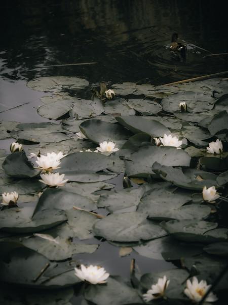 Wildlife: Flowers