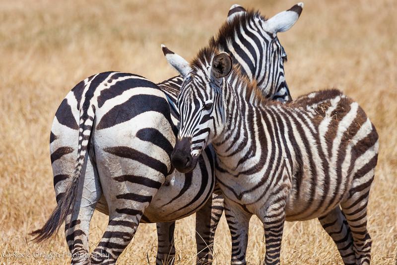 Ngorongoro-52.jpg