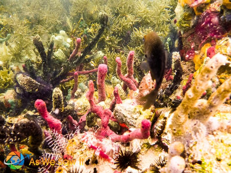 Under-Bocas-Del-Toro-1010214.jpg