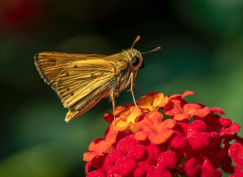 August 29, 2020butterflies-4.jpg