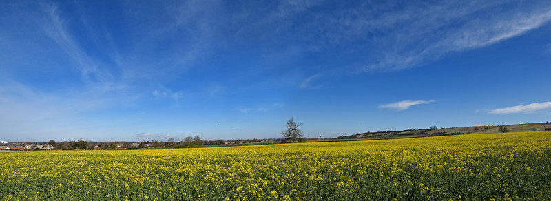 LINCOLNSHIRE FIELDS IN APRIL