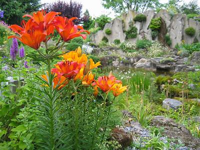 Rock Garden Marijn 2004-2009