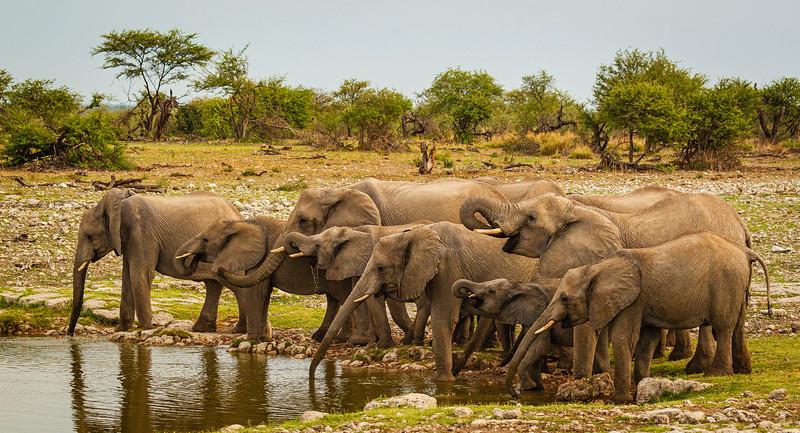 Elephants at Klein Okevi 2