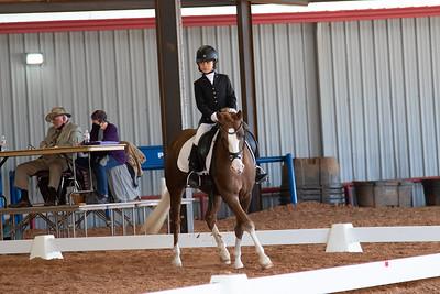 Horse 117