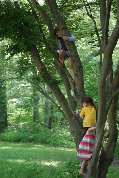Tree climbers.