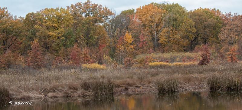 fall scene 110717-4.jpg