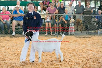 2017 Chino Fair - Market Goats