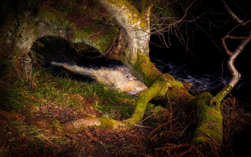 Forest Shadows-111.jpg