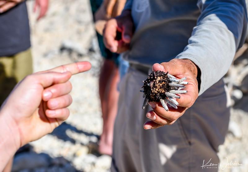 2018 Darwin's Bay Beach-3.jpg