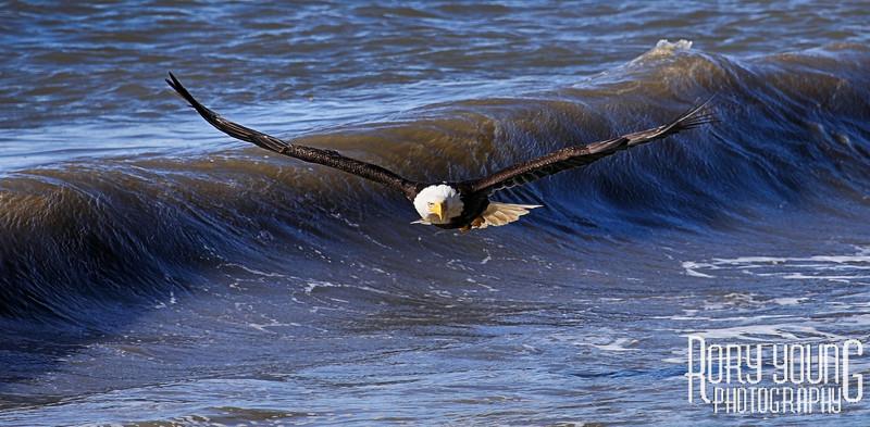 EagleWaves.jpg