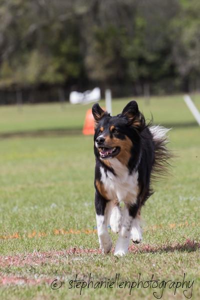 _MG_3108Up_dog_International_2016_StephaniellenPhotography.jpg
