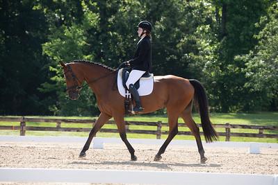Horse 382