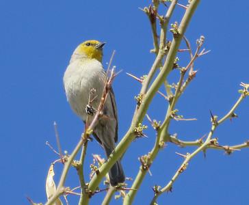 Wildlife - Arizona