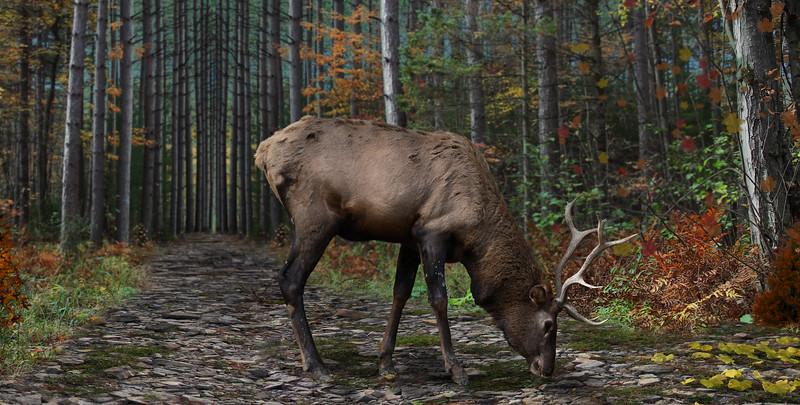 o-deer-1.jpg