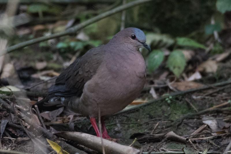 19-Sept Brazil Birds-8705.JPG