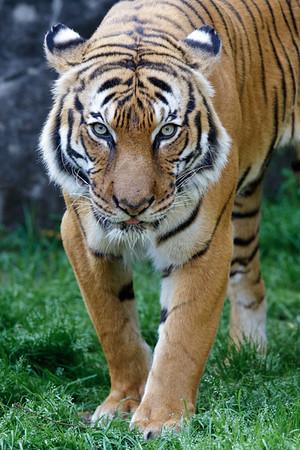 2012 - 03 - Houston Zoo