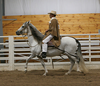 Class 32, Adult Equitation