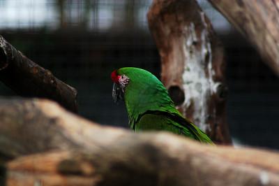 09.03.2008-Zoo-Dortmund