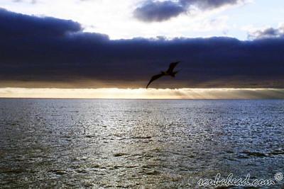 2008 Islas Revillegigedo, Mexico