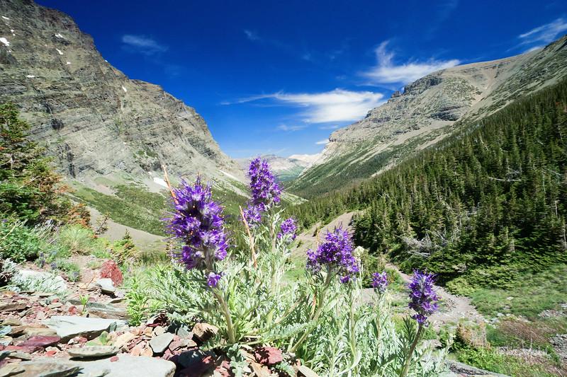 150611_CrackerLake_glacier_national_park_5592.jpg