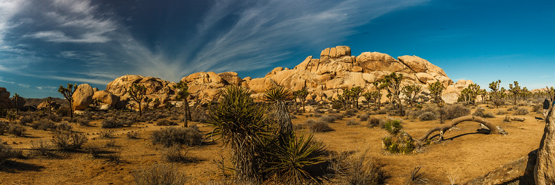 Yucca & boulders. Joshua Tree National Park. This is a 7 shot panorama