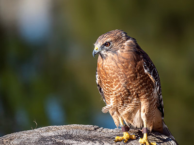 Blackland Prairie Raptor Center - Photo Day October 12, 2019