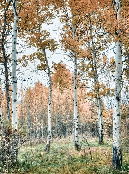 Fall Idaho-9.jpg