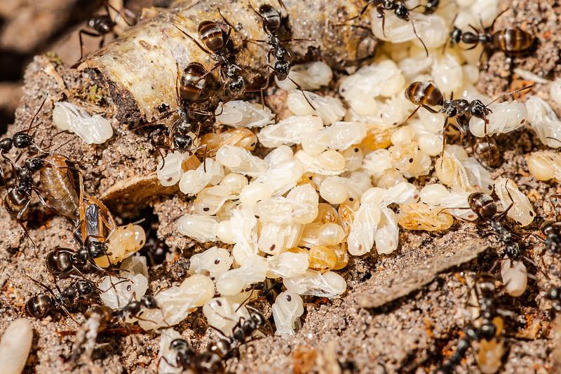 Ants-4.jpg