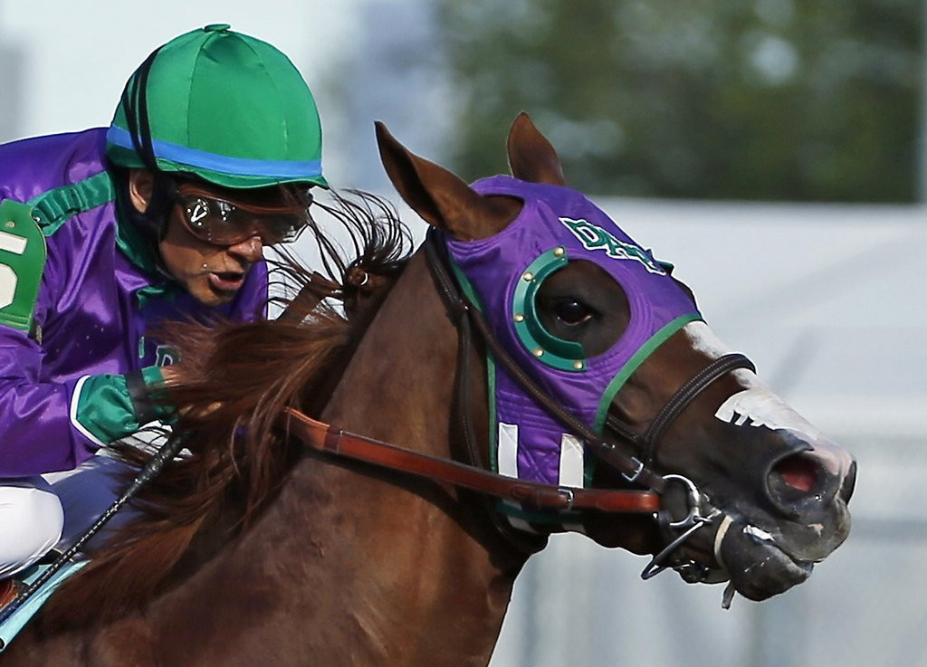 """. <p><b> California Chrome�s Triple Crown chances got a huge boost Monday after New York officials announced he�d be allowed to race in the Belmont Stakes with � </b> <p> A. Nasal strips <p> B. Lasix <p> C. No jockey <p><b><a href=\'http://www.twincities.com/sports/ci_25795726/california-chrome-cleared-wear-nasal-strip-belmont\' target=\""""_blank\""""> LINK </a></b> <p>    (AP Photo/Matt Slocum, File)"""